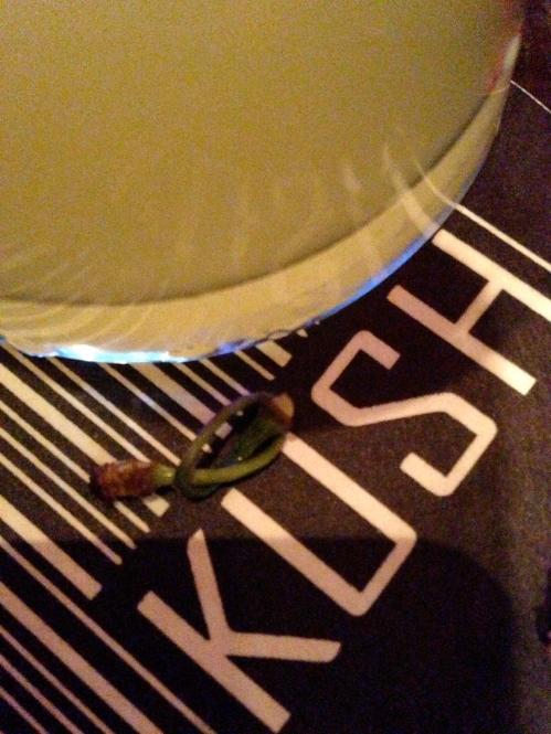 Kush Cocktail Bar Maraschino Martini