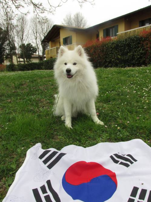 Voltron the Dog in Italy